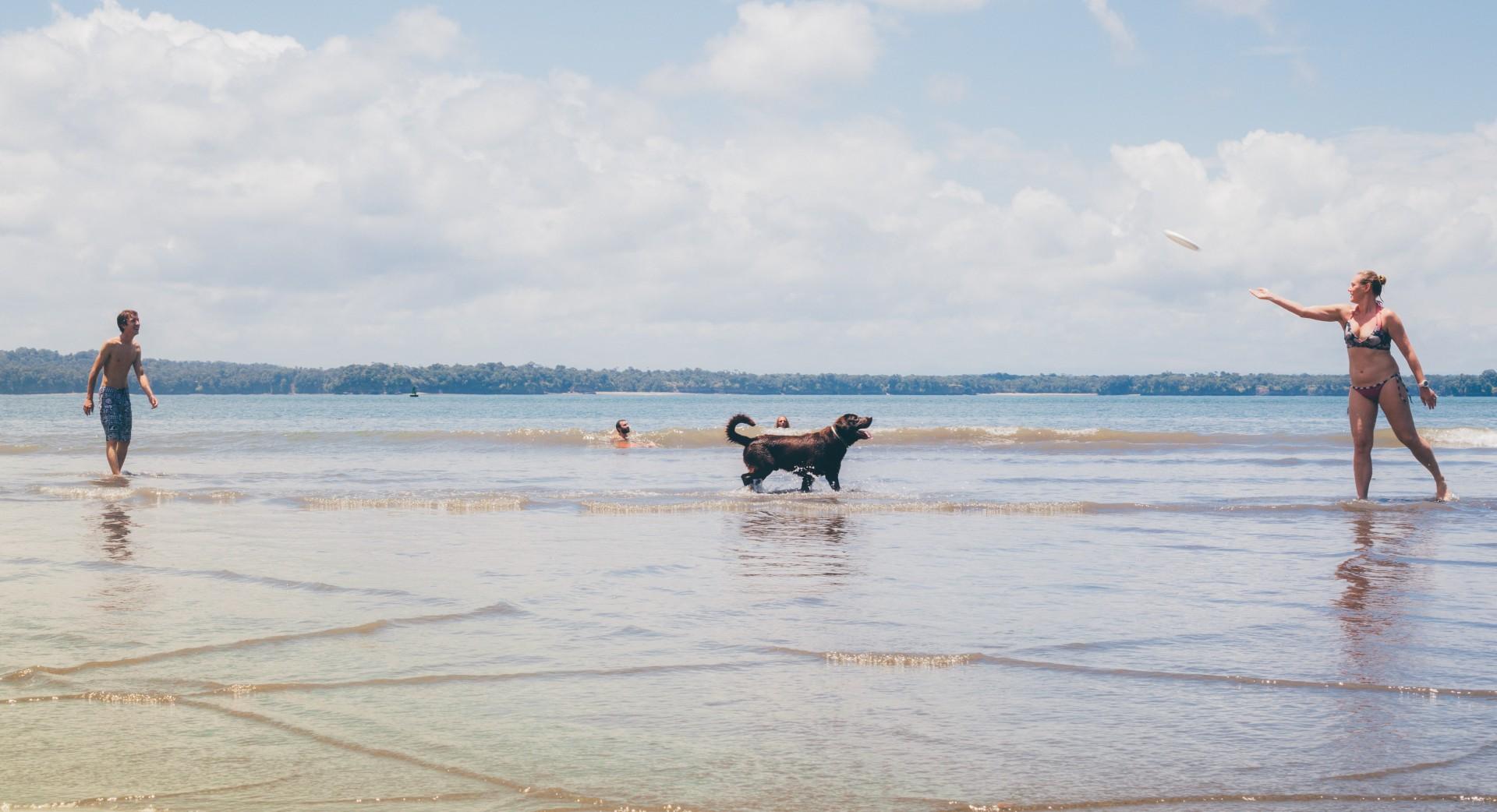 Málaga es la provincia andaluza con más playas para perros