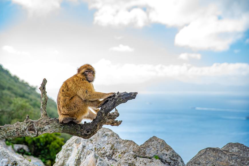 Vacaciones en Gibraltar